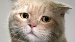 고양이 보호소 학살