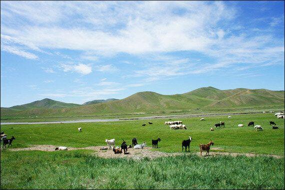 몽골 대초원에서 '큰일'을