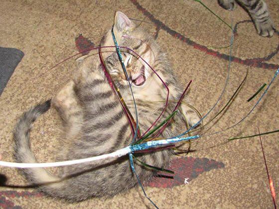 두 발 잃은 고양이의