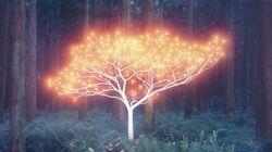 빛을 머금은 나무, 사진으로