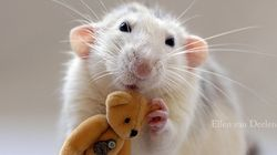 테디베어와 쥐의 우정