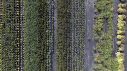 Παράλληλη αποκατάσταση: Μία καινοτόμος περιβαλλοντική πρακτική εφαρμόζεται στη