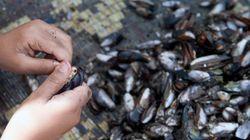 Interdiction de commercialisation de coquillages à El