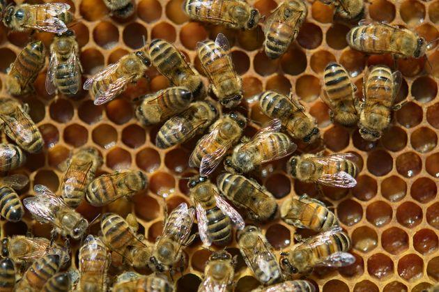 Le Bloc souhaite interdire les pesticides tueurs d'abeilles d'ici 4