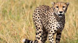 Βίντεο: Οι άγριες συνήθειες ζευγαρώματος των