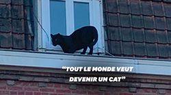 Une panthère noire délogée du toit d'un immeuble à Armentières dans le
