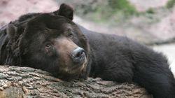 Το Κογκρέσο δίνει το «πράσινο» φως στους κυνηγούς να στοχεύουν αρκούδες σε χειμερία