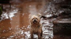 Τα αδέσποτα ζώα της δυτικής Αττικής εκπέμπουν