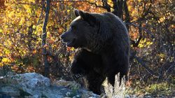 H εκδίκηση της αρκούδας στους κυνηγούς: Αυτοί την τρόμαξαν και αυτή