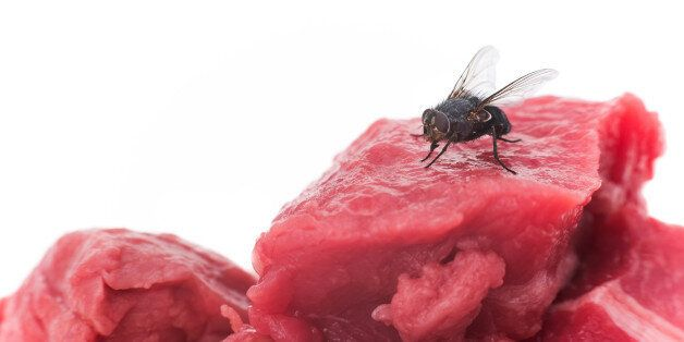 A housefly on a piece of raw meat - white