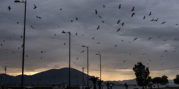 Seagulls in panic due to extreme weather conditions. Greece facing extreme weather conditions. In Artaki...