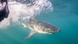 Πορτογαλία: Ψαράς αλίευσε σπάνιο είδος
