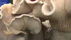 Κινέζος αγρότης ανακαλύπτει συστάδα από σπάνια, μεγάλα