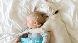 Κακοποιημένος σκύλος φοβάται τους πάντες εκτός από αυτό το μωράκι. Το instagram αποδεικνύει την υπέροχη σχέση