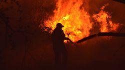 Φωτιά σε ποιμνιοστάσιο στον Τύρναβο- κάηκαν 100