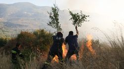 Πυρκαγιά σε δασική περιοχή στη Σέτα