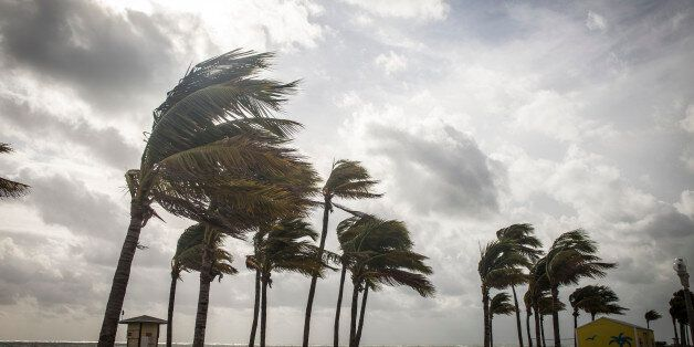 Palm Trees Before A Tropical Storm or