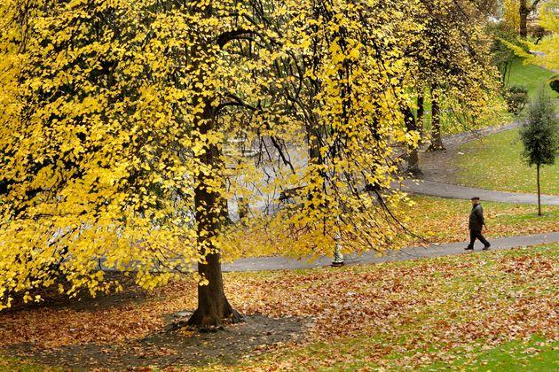 Un hombre camina entre los árboles, ocres y dorados por el otoño, del parque de doña Casilda en