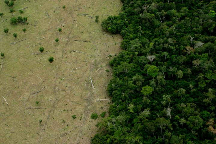 Huge areas of the Amazon are deforested for cattle, timber and other industries.