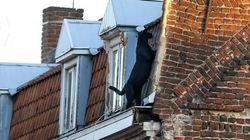 Ενας μαύρος πάνθηρας βολτάρει σε γαλλική
