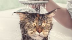 Cat Loves A Shower, Baby Cow Adores A Bath – Plus 3 Other Animals To End The