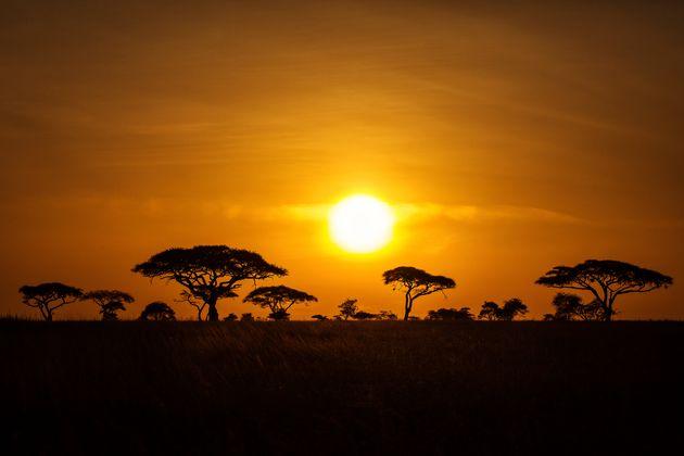 Dall'Africa c'è sempre qualcosa di