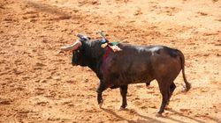 Πορτογαλία: Ταυρομάχος βρήκε τον θάνατο αφού αντιμετώπισε ταύρο με γυμνά
