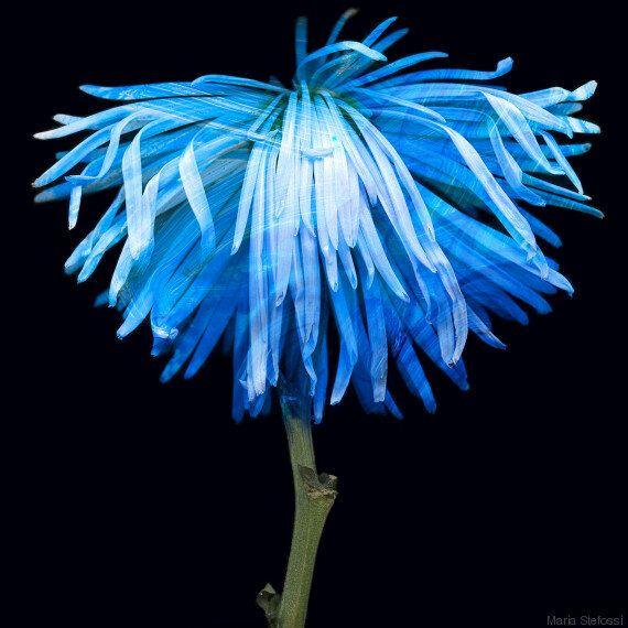 Τα φαγιούμ των λουλουδιών: Η Μαρία Στέφωση δημιουργεί προσωπικά πορτρέτα λουλουδιών, δίνοντάς τους νέα