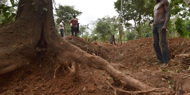 A gold digger stands near a tree in the forest of Bore village near Dimbokro, central Ivory Coast on...