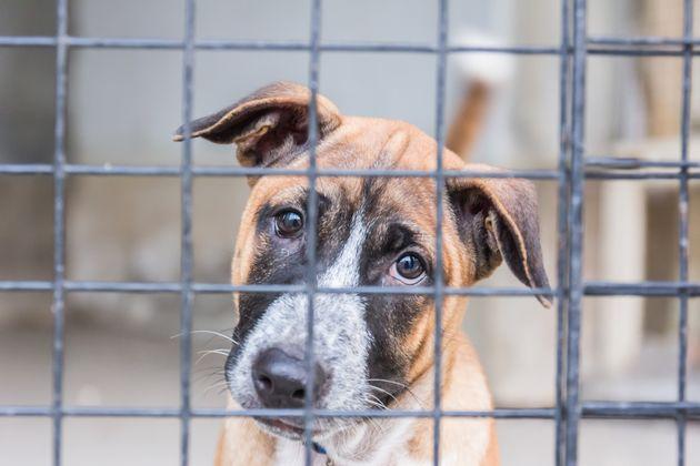 Migliaia di cani condannati all'ergastolo nei canili, lo Stato