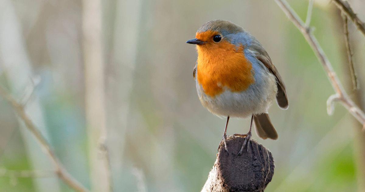 3 milliards d'oiseaux ont disparu en Amérique du Nord en 45 ans