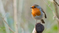 3 milliards d'oiseaux ont disparu en Amérique du Nord en 45 ans et le coupable est tout