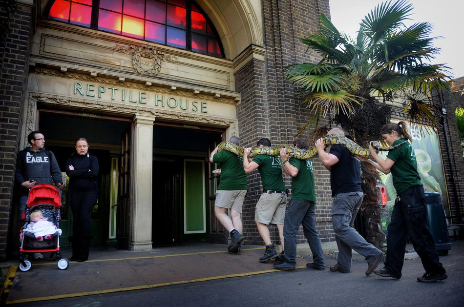 O famoso momento com uma serpente no primeiro filme Harry Potter foi filmado na casa dos répteis do Zoo de Londres.