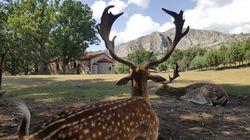 Το πάρκο εξημερωμένων ελαφιών της Κοζάνης που έχει μαγέψει μικρούς και