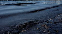 Το WWF υποβάλλει μήνυση κατά παντός υπευθύνου για τη ρύπανση στον