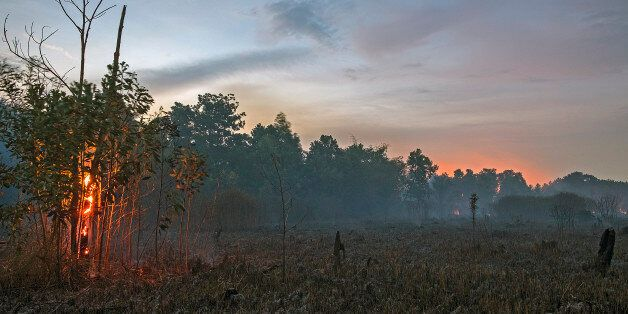 A freshly scorched landscape is seen in the early afternoon hours of Augustus 30, 2017 at the Pekanbaru,...