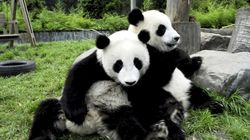 WWF: Κατηγορεί το ΥΠΕΝ για «πρακτικές του παρελθόντος» σε σχέση με τους «αυθαίρετους
