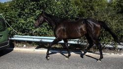 Επιβεβαιώθηκε κρούσμα πυρετού του Δυτικού Νείλου σε άλογο στα