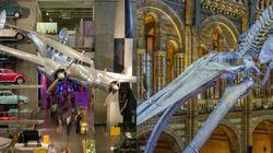Το Μουσείο Φυσικής Ιστορίας και το Μουσείο Επιστήμης του Λονδίνου είχαν τον καλύτερο καβγά που έχει γίνει στο