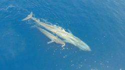 Το «μυστήριο» γύρω από σπάνιο θαλάσσιο ζώο που βρέθηκε στις ακτές του Texas City μετά την καταιγίδα