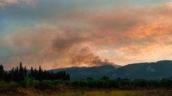 Ζάκυνθος: Μέτρα για την προστασία των καμμένων δασών εξήγγειλαν οι αρμόδιοι