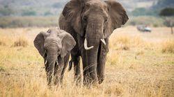 Ινδία: Ελέφαντας τον τραυμάτισε θανάσιμα όταν προσπάθησε να βγάλει σέλφι μαζί