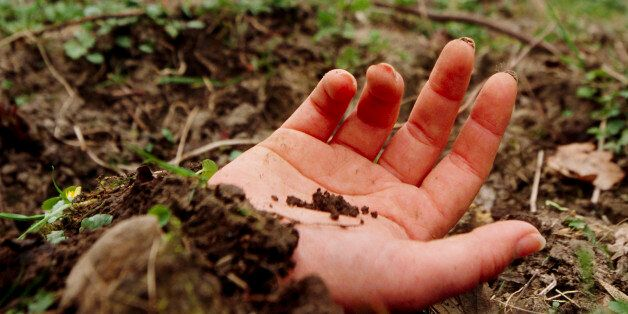 Murder victim. Exposed hand of a murder victim who has been buried in a shallow grave. The murderer is...