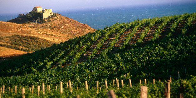 Κρασί 6.000 ετών ανακαλύφθηκε στη Σικελία. «Πριν θεωρούσαμε ότι η κουλτούρα του κρασιού έφτασε εδώ από...