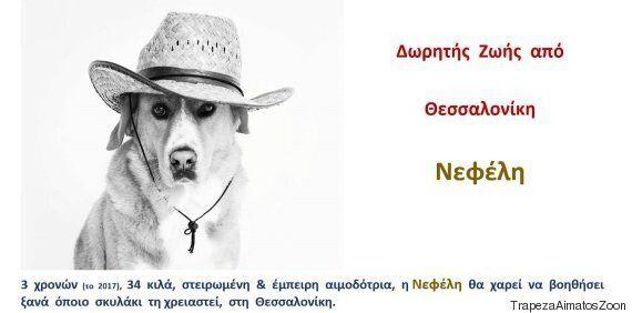Τράπεζα Αίματος Ζώων Ελλάδας: Εσείς ξέρατε πως το κατοικίδιό σας μπορεί να γίνει εθελοντής