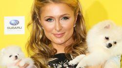 Τα σκυλιά της Paris Hilton μένουν σε καλύτερο σπίτι από όλους