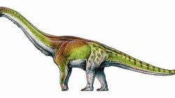 Βρέθηκε ο «πρωταθλητής» των δεινοσαύρων: Παταγοτιτάν, ο μεγαλύτερος δεινόσαυρος που έζησε στον
