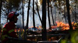 Πυρκαγιές στη Ζάκυνθο, Θεσπρωτία και