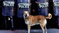 Dogs of Democracy: Το ντοκιμαντέρ για τα αδέσποτα τετράποδα στην Αθήνα της κρίσης στις 31 Αυγούστου στην Ταινιοθήκη της