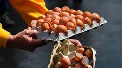 Γερμανία: Οι ποσότητες μολυσμένων αυγών που έχουν εισαχθεί στη χώρα είναι πολύ